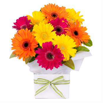 Gerbera Box Bright Mix Flowers
