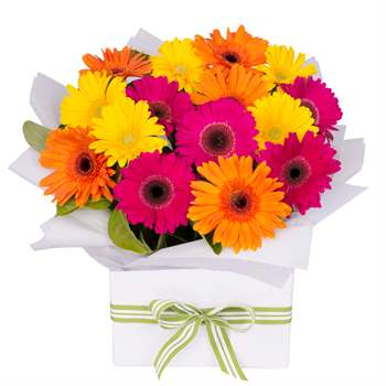 Gerbera Box Bright Mix Large Flowers