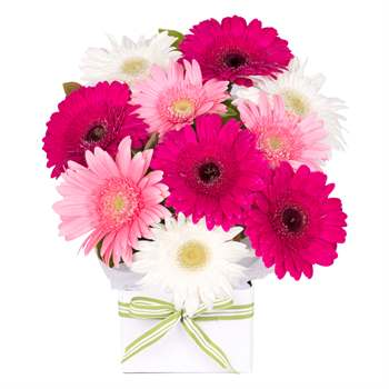 Gerbera Box Pink Mix Flowers