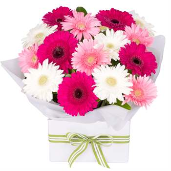 Gerbera Box Pink Mix Large Flowers