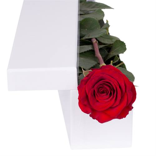 Red Rose with Chocs in gift box