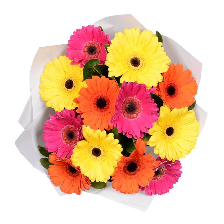 Gerbera Bouquet - Vibrant Mix