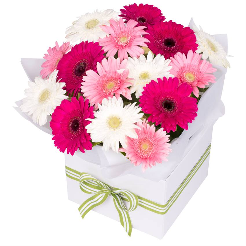 Gerbera Box Pink Mix Large