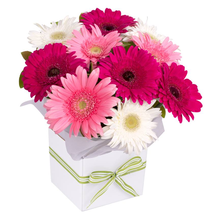 Gerbera Box Pink Mix