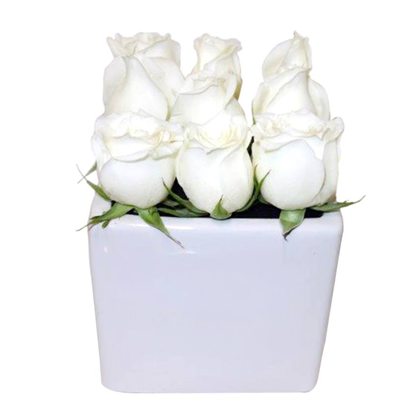 The White Rose Cube